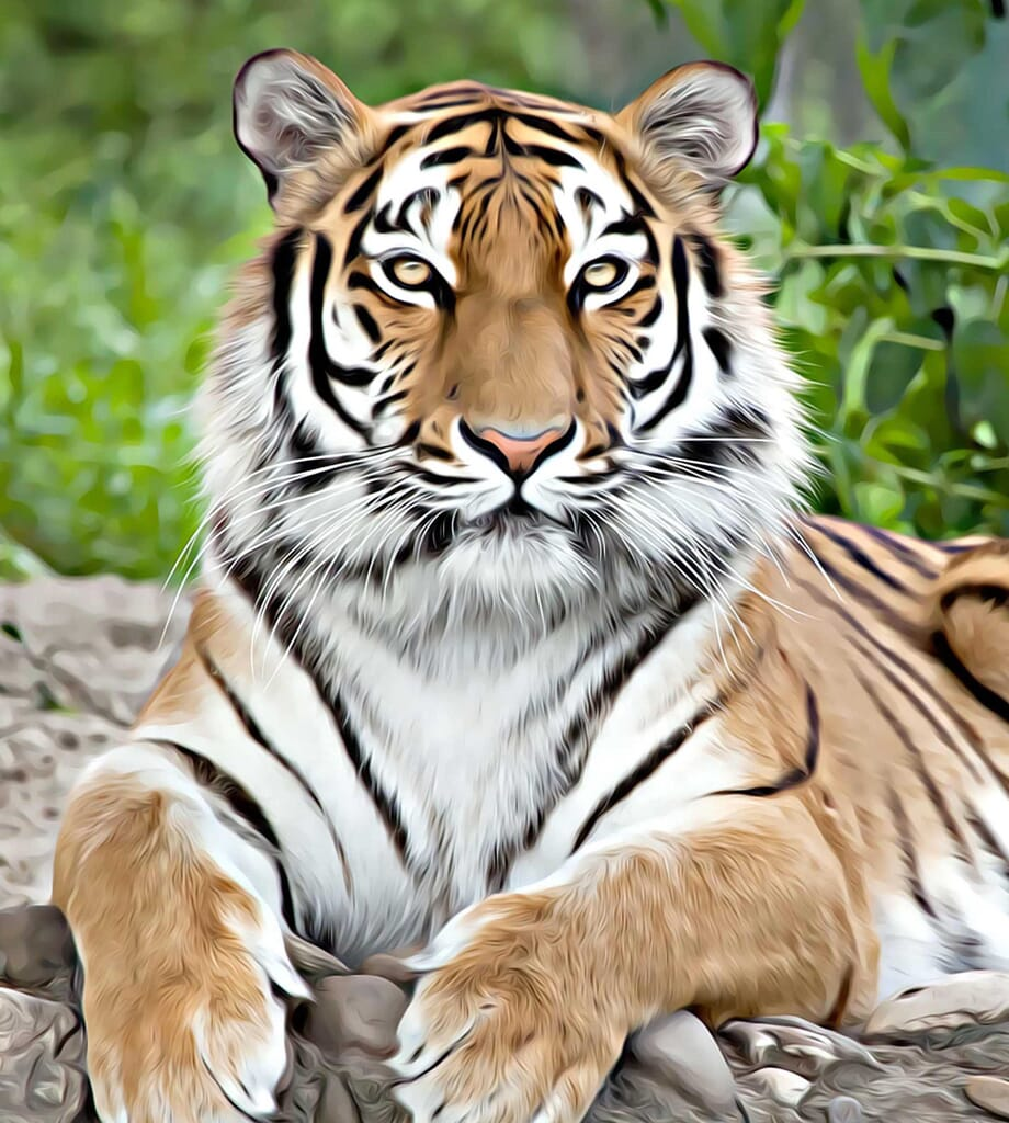 tiger photo great for the Iphone 7